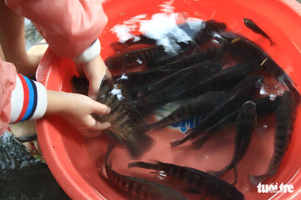 Sau mưa, dân Đà Nẵng nô nức ra đường bắt cá - Ảnh 8.