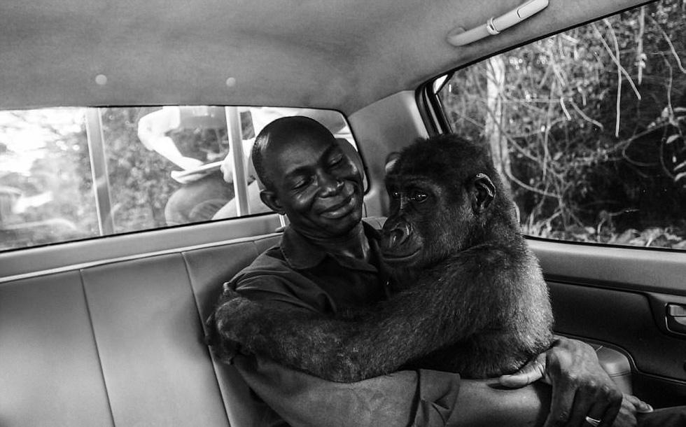Những bức ảnh động vật hoang dã ấn tượng - Ảnh 1.