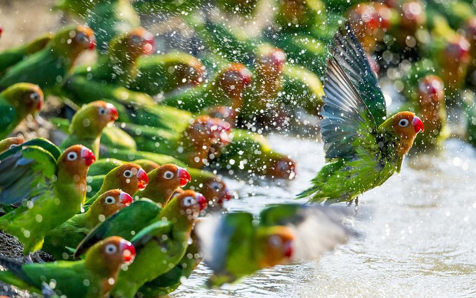 Những bức ảnh động vật hoang dã ấn tượng - Ảnh 4.