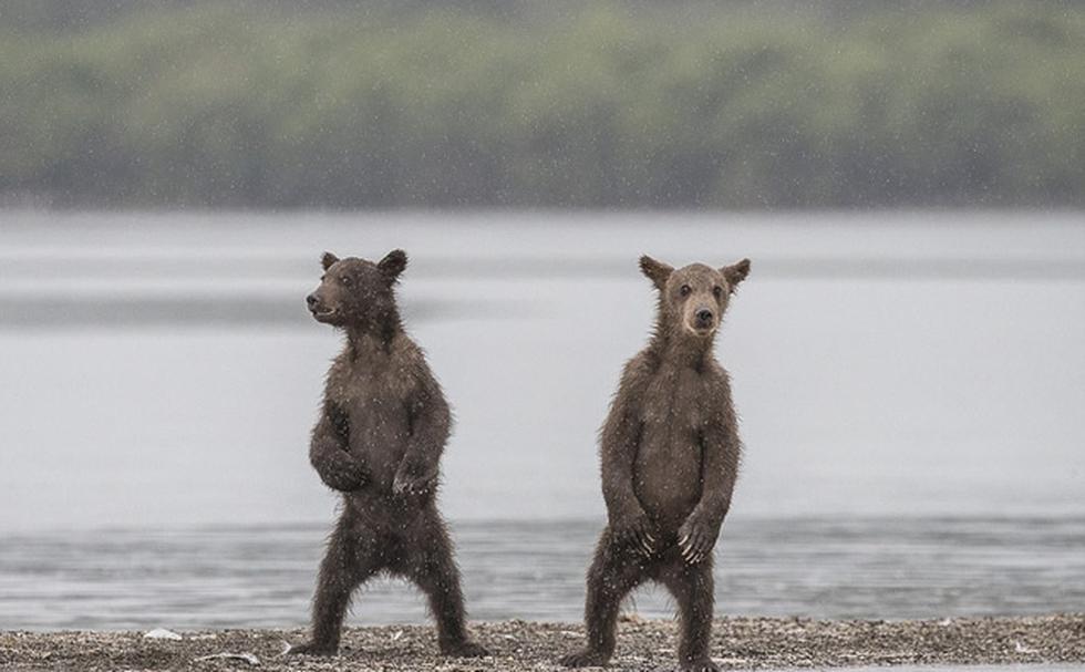 Những bức ảnh động vật sống động và vui - Ảnh 2.