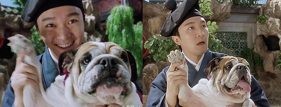 Điểm danh các nghệ sĩ Hoa ngữ tình nguyện làm sen cho chó - Ảnh 1.