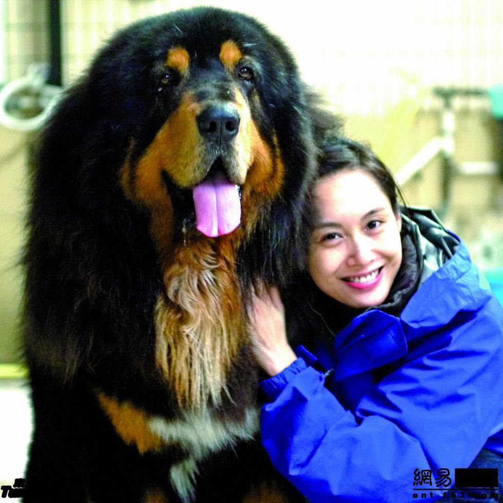 Điểm danh các nghệ sĩ Hoa ngữ tình nguyện làm sen cho chó - Ảnh 2.