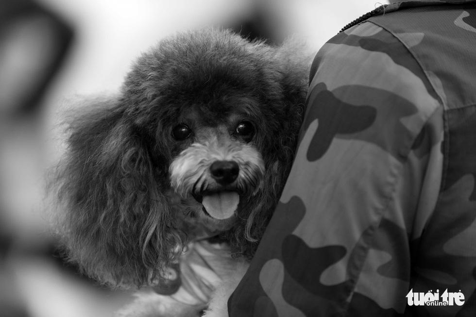 Những hình ảnh của con người với những chú chó - Ảnh 9.