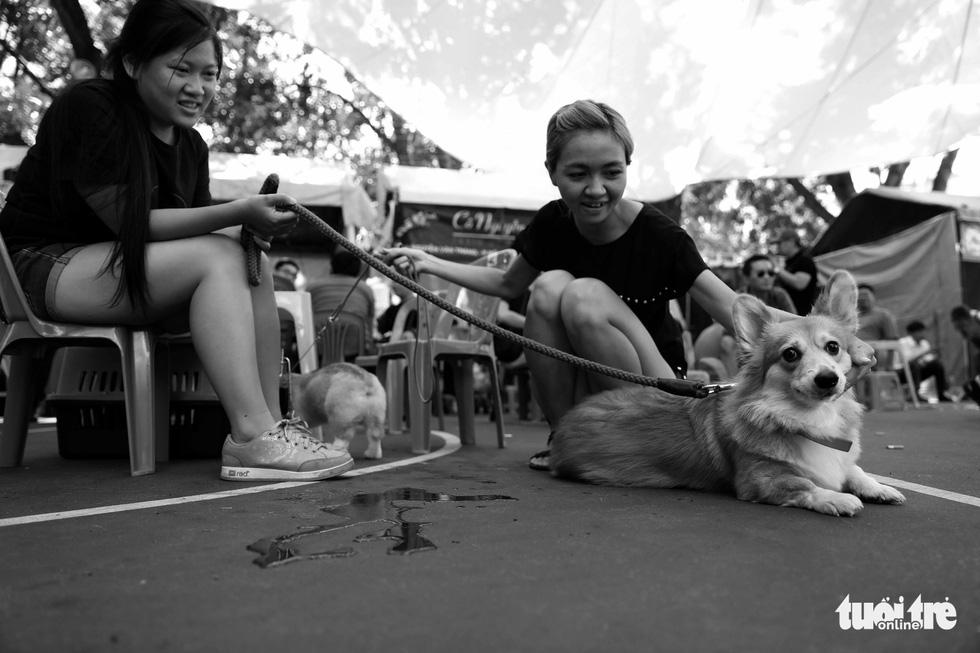 Những hình ảnh của con người với những chú chó - Ảnh 4.