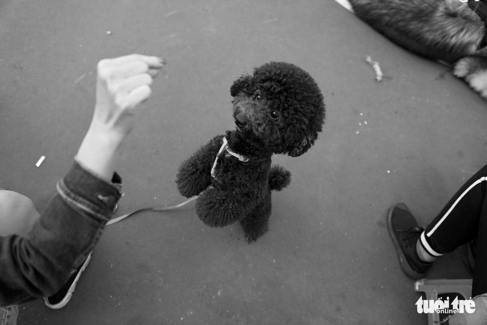 Những hình ảnh của con người với những chú chó - Ảnh 10.