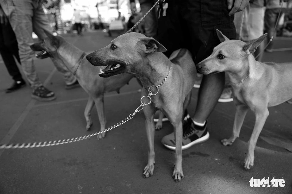 Những hình ảnh của con người với những chú chó - Ảnh 15.