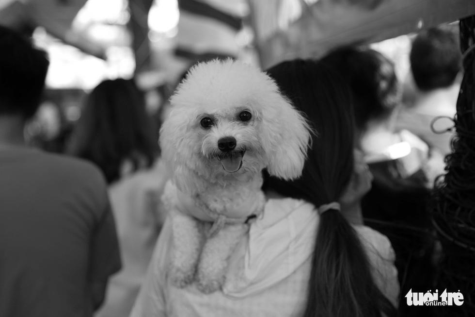 Những hình ảnh của con người với những chú chó - Ảnh 16.