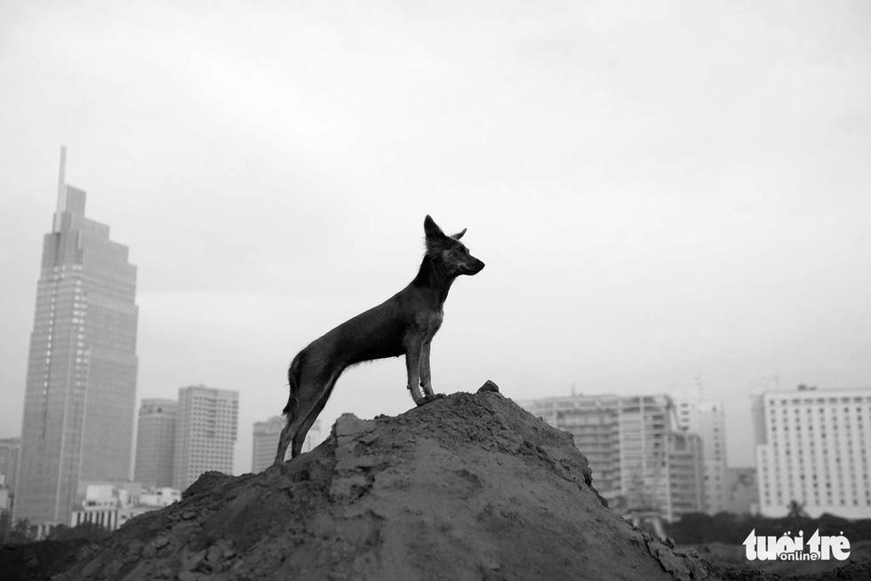 Những hình ảnh của con người với những chú chó - Ảnh 17.