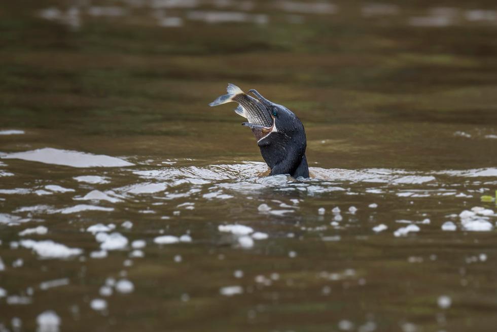 Vẹt nựng nhau ở vùng đất ngập nước nhất thế giới - Ảnh 13.