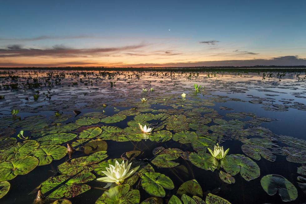 Vẹt nựng nhau ở vùng đất ngập nước nhất thế giới - Ảnh 16.