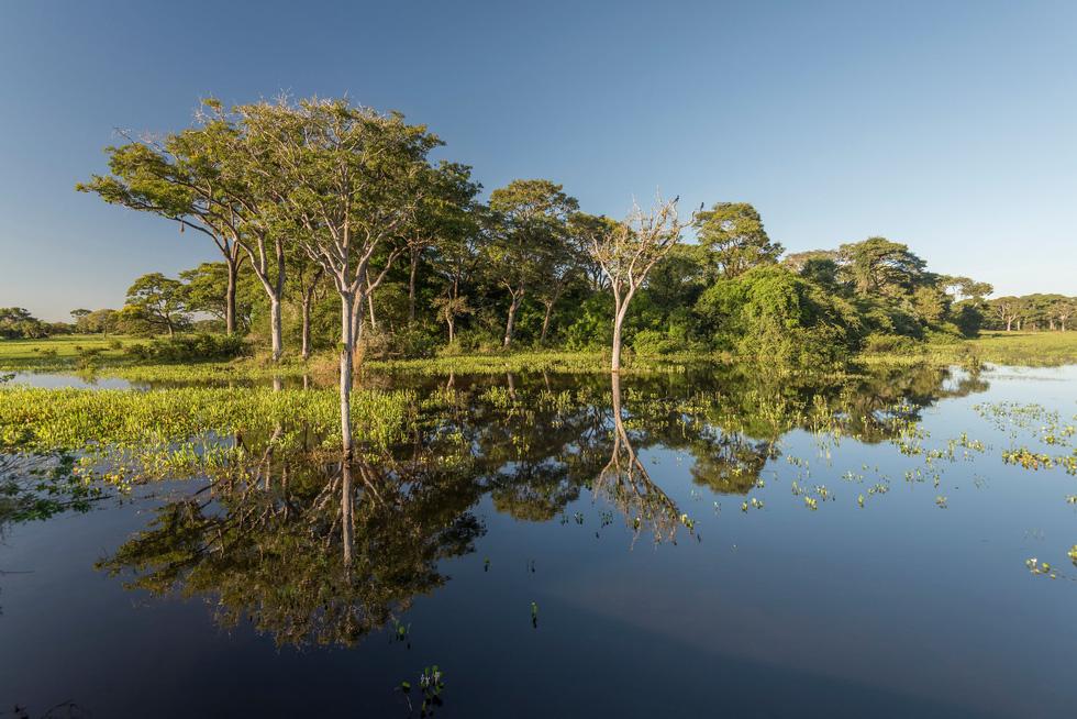 Vẹt nựng nhau ở vùng đất ngập nước nhất thế giới - Ảnh 5.
