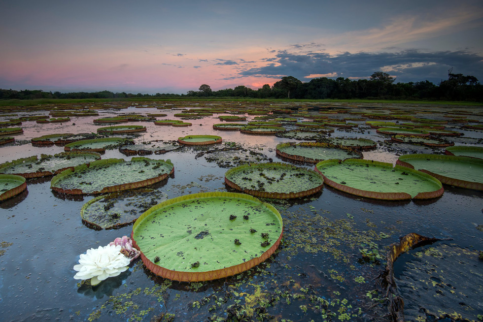 Vẹt nựng nhau ở vùng đất ngập nước nhất thế giới - Ảnh 6.