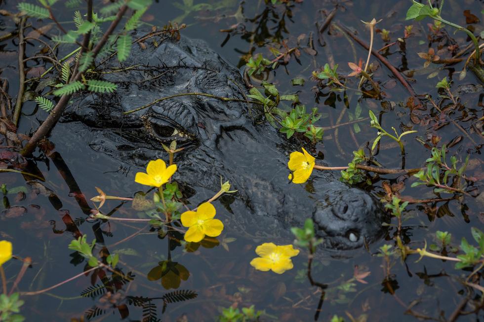 Vẹt nựng nhau ở vùng đất ngập nước nhất thế giới - Ảnh 7.