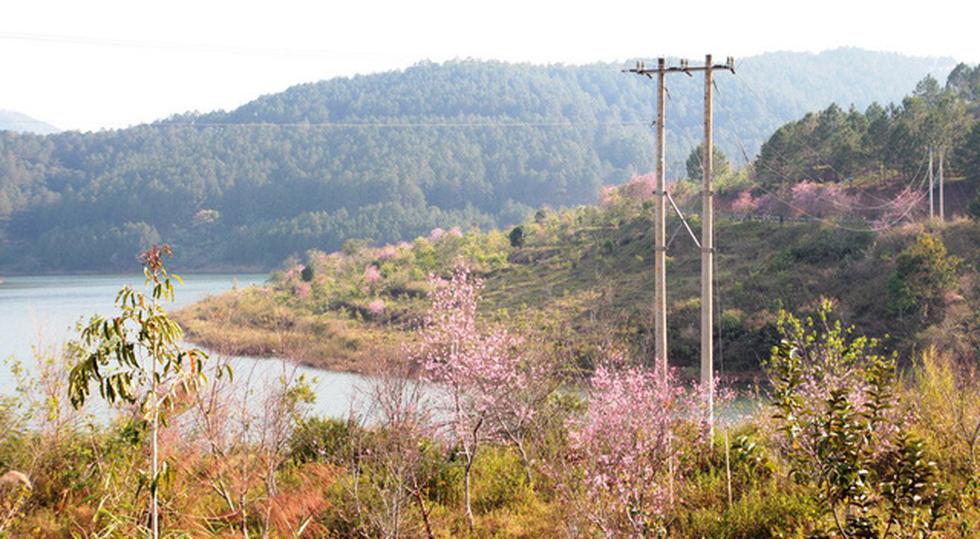 Lễ hội qua rồi mai anh đào hồ Tuyền Lâm mới nở rộ - Ảnh 4.