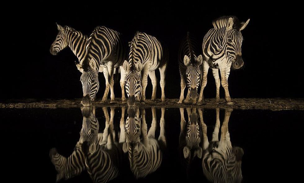 Những bức ảnh động vật hoang dã ấn tượng - Ảnh 8.
