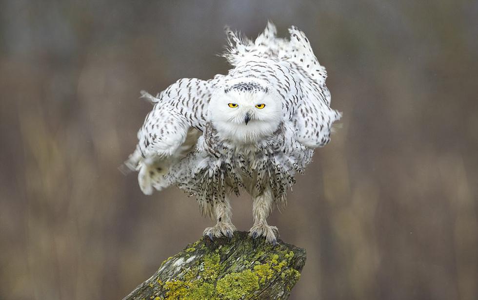 Những bức ảnh động vật hoang dã ấn tượng - Ảnh 9.