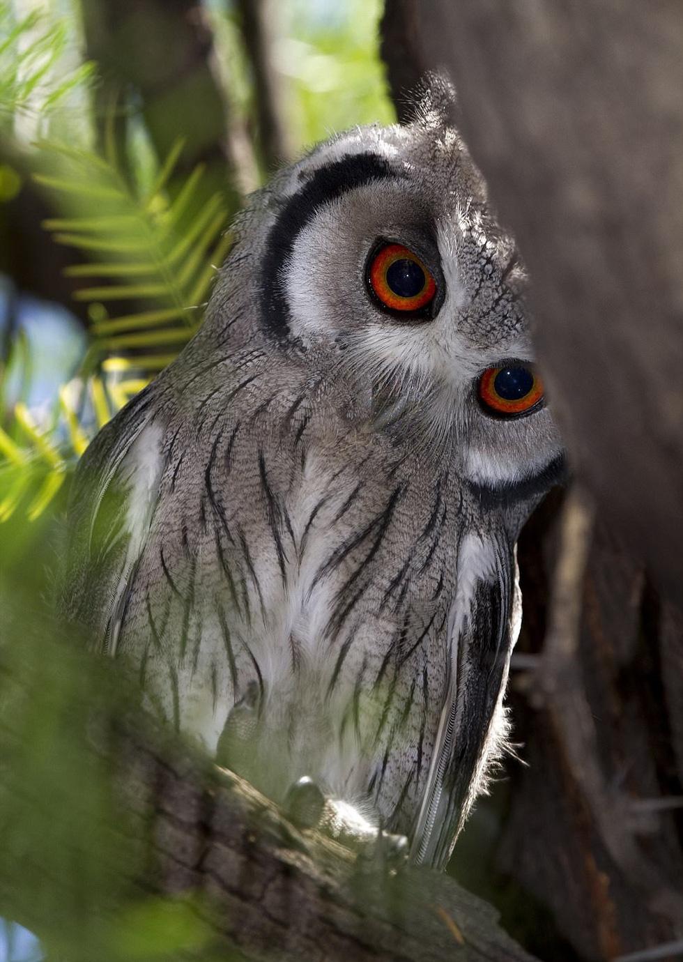 Những bức ảnh động vật hoang dã ấn tượng - Ảnh 11.