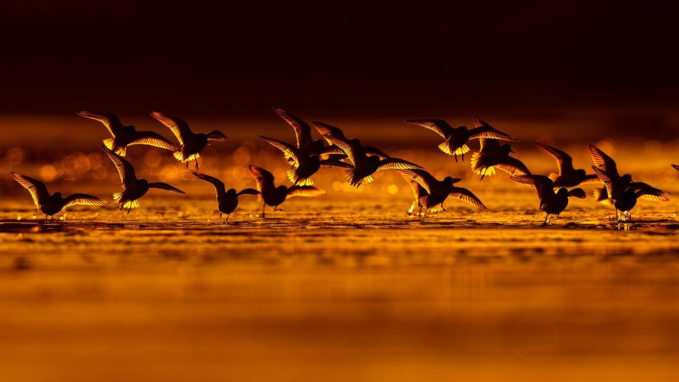 Đẹp ngỡ ngàng thế giới chim muông hoang dã - Ảnh 10.