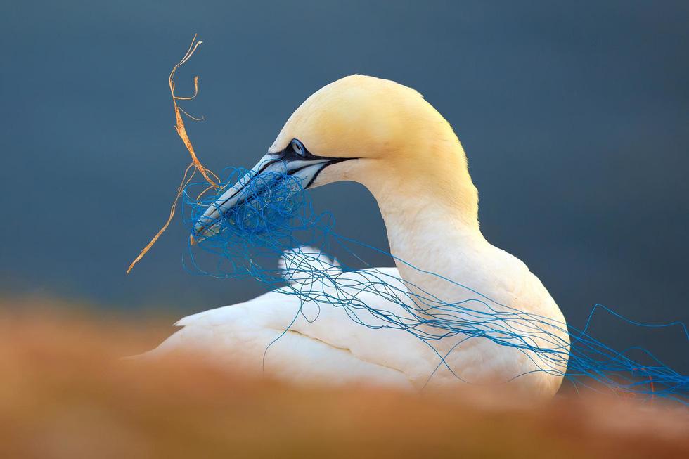 Đẹp ngỡ ngàng thế giới chim muông hoang dã - Ảnh 15.