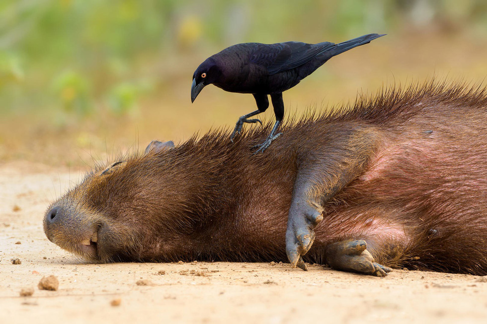 Đẹp ngỡ ngàng thế giới chim muông hoang dã - Ảnh 16.