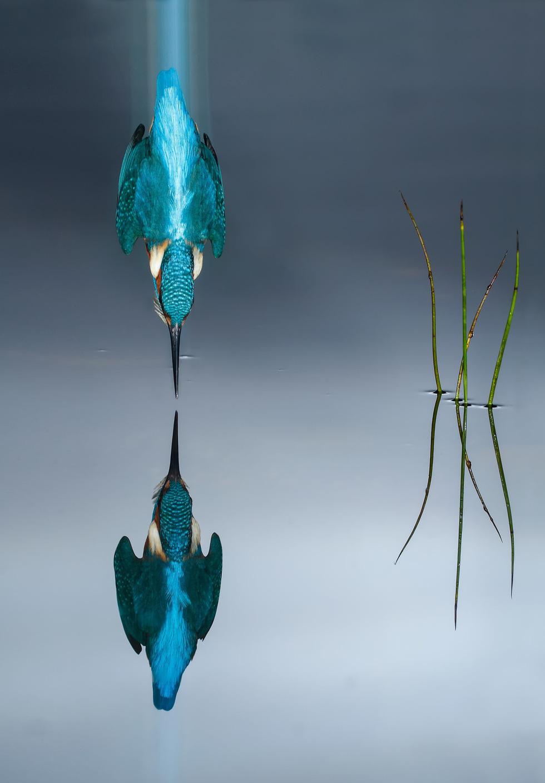 Đẹp ngỡ ngàng thế giới chim muông hoang dã - Ảnh 2.