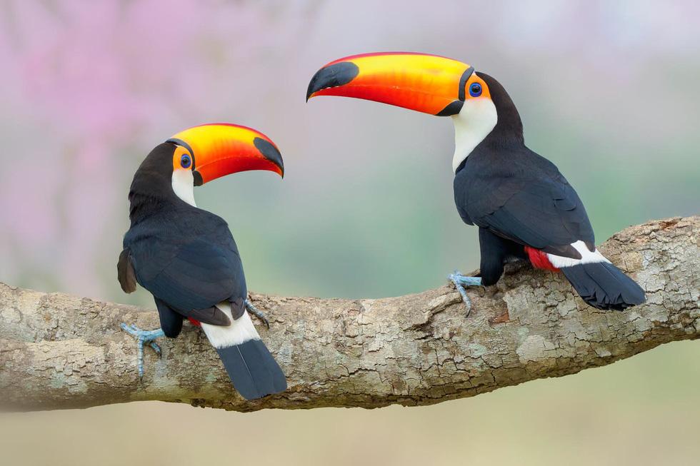 Đẹp ngỡ ngàng thế giới chim muông hoang dã - Ảnh 5.