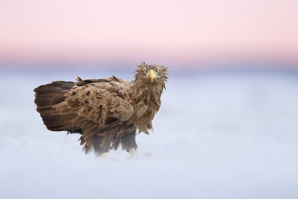 Đẹp ngỡ ngàng thế giới chim muông hoang dã - Ảnh 9.