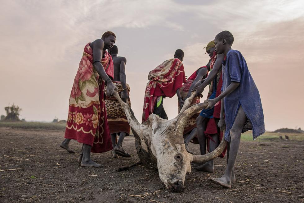 Trải nghiệm cuộc sống chăn bò của người Dinka ở Nam Sudan - Ảnh 4.