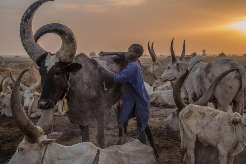 Trải nghiệm cuộc sống chăn bò của người Dinka ở Nam Sudan - Ảnh 7.