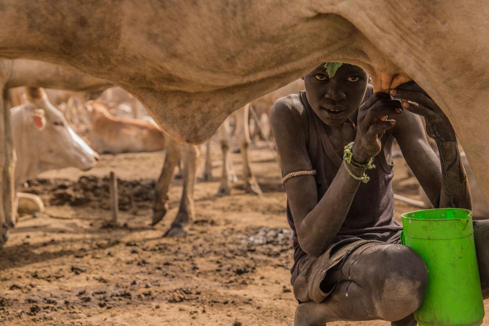 Trải nghiệm cuộc sống chăn bò của người Dinka ở Nam Sudan - Ảnh 8.
