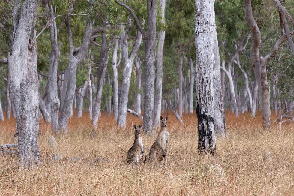 Người phụ nữ chinh phục tuyến đường mòn dài nhất Úc - Ảnh 19.