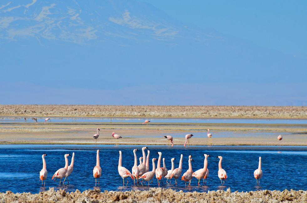 5 địa điểm nhất định phải đến ở Chile - Ảnh 2.