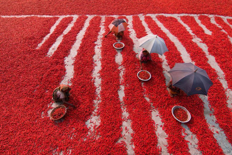 Ấn tượng Việt Nam trong chung kết thi ảnh Smithsonian - Ảnh 14.