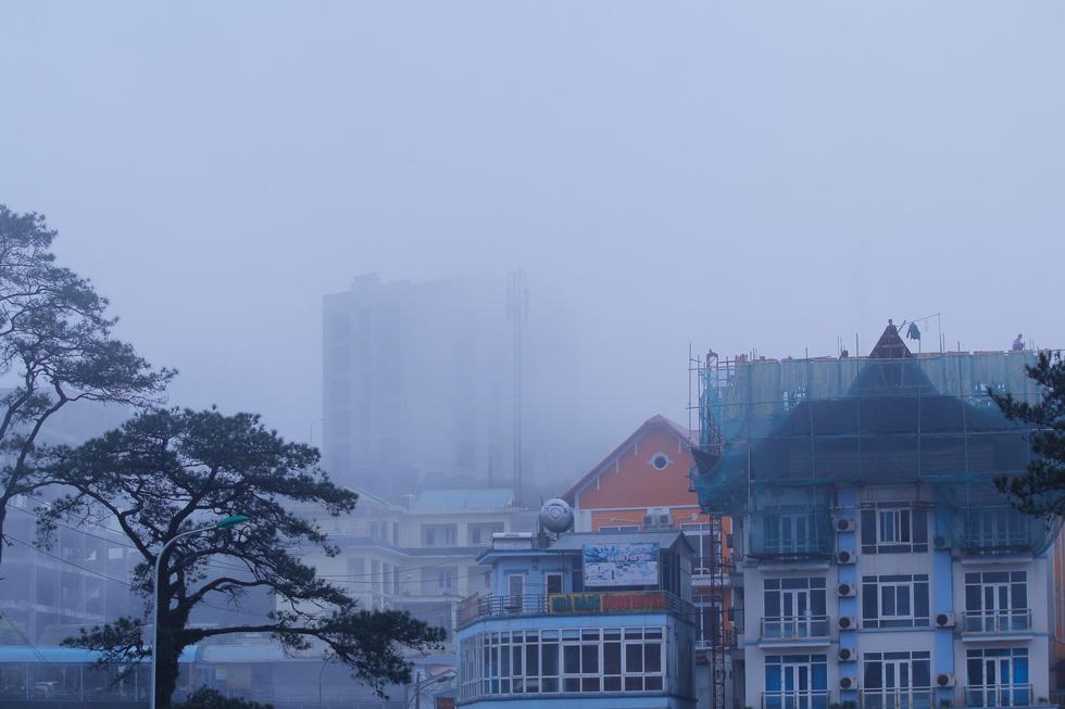 Sương mù tan, Tam Đảo hiện ra lạ lẫm - Ảnh 8.