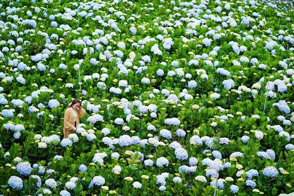 5 kinh nghiệm chụp hoa ở Đà Lạt - Ảnh 1.