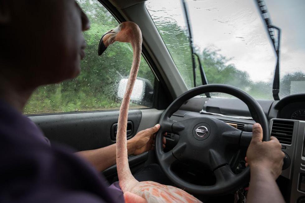 Đến Curaçao gặp 'đại sứ chim hồng hạc' - Ảnh 1.