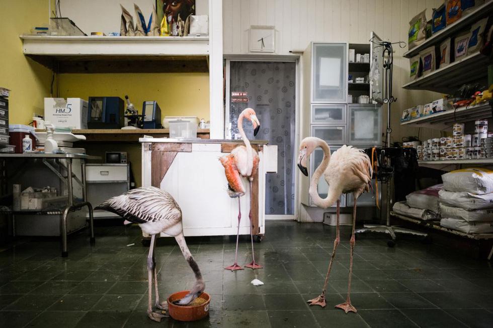 Đến Curaçao gặp 'đại sứ chim hồng hạc' - Ảnh 11.