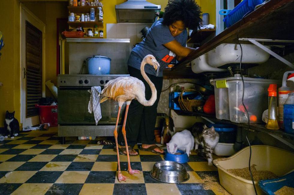 Đến Curaçao gặp 'đại sứ chim hồng hạc' - Ảnh 2.