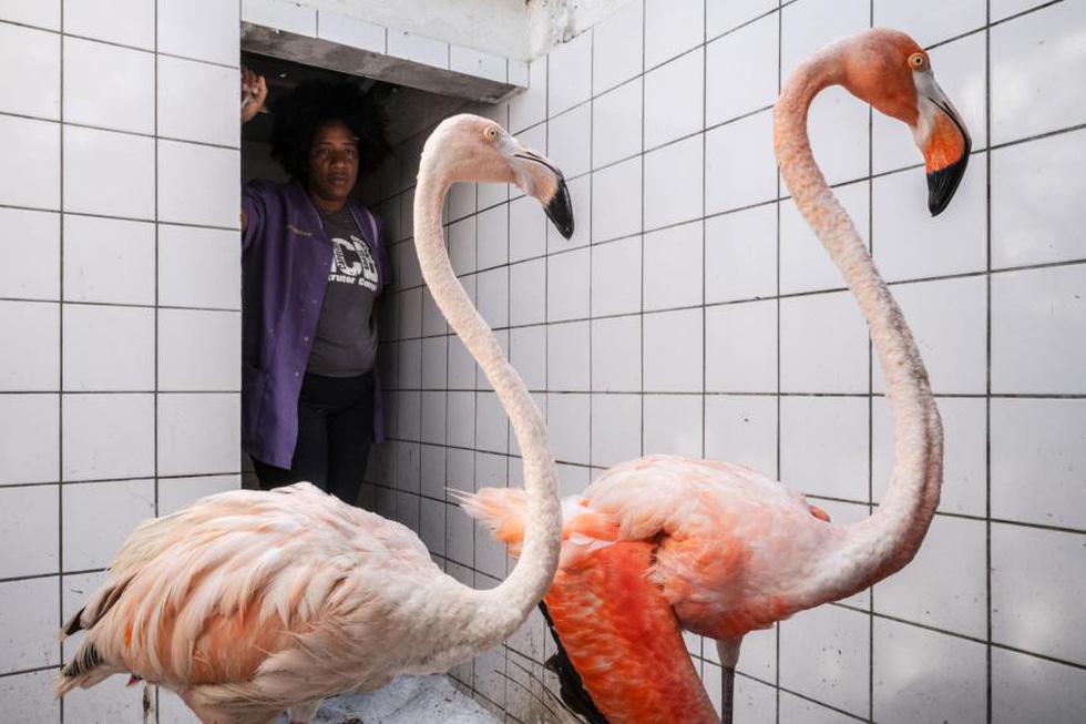Đến Curaçao gặp 'đại sứ chim hồng hạc' - Ảnh 3.