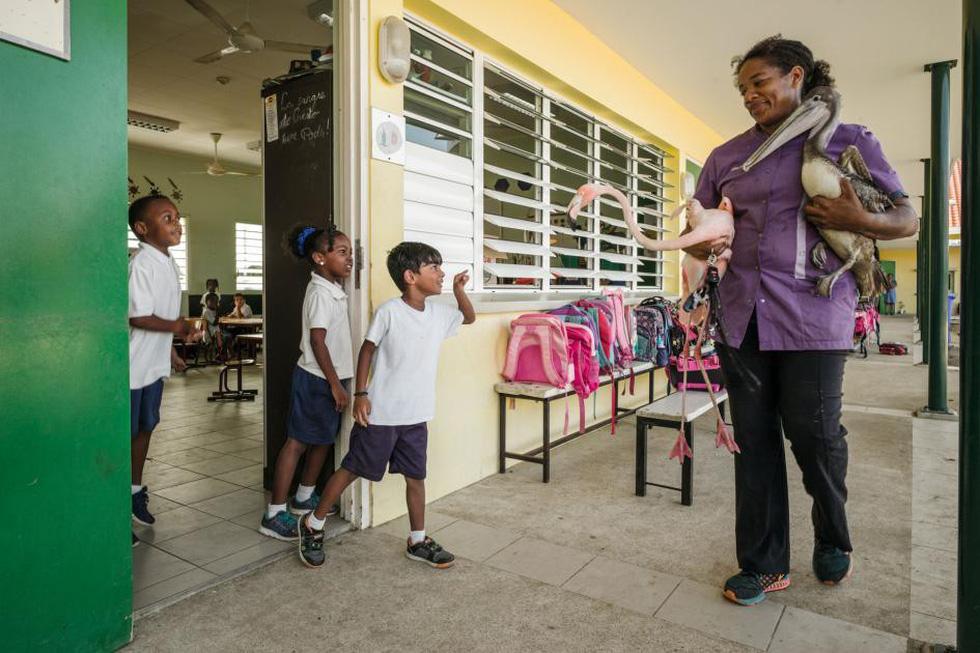 Đến Curaçao gặp 'đại sứ chim hồng hạc' - Ảnh 4.