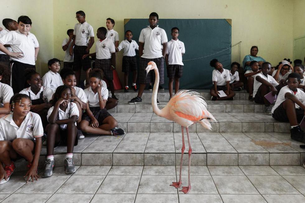 Đến Curaçao gặp 'đại sứ chim hồng hạc' - Ảnh 5.