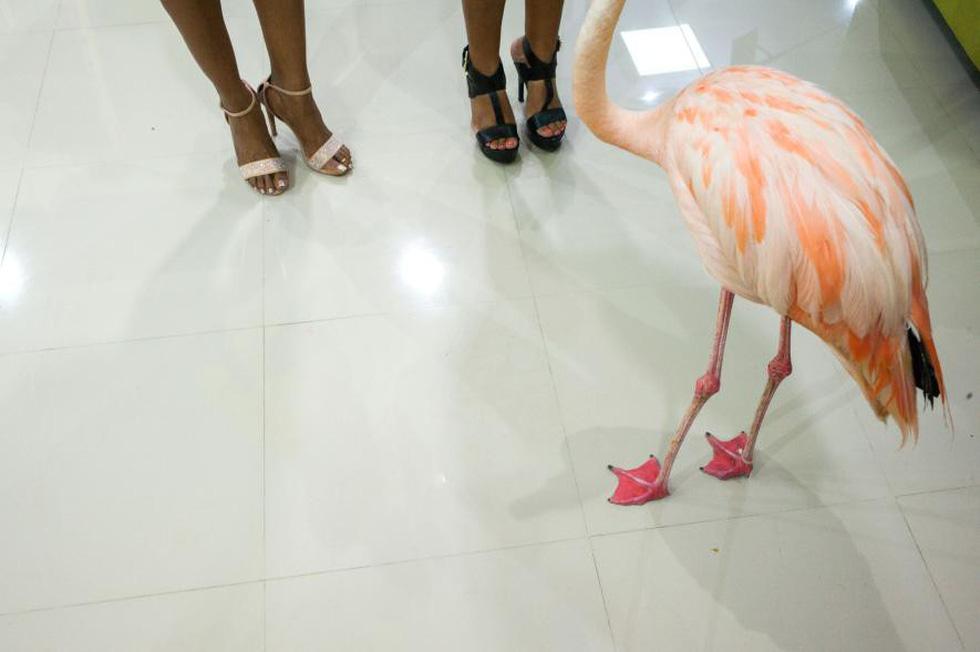 Đến Curaçao gặp 'đại sứ chim hồng hạc' - Ảnh 7.