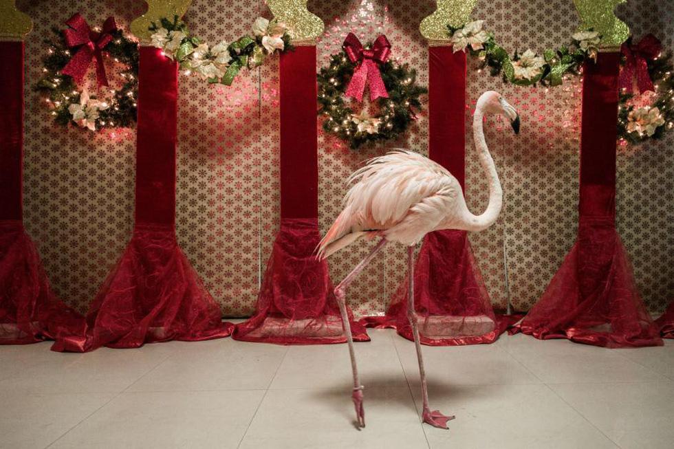Đến Curaçao gặp 'đại sứ chim hồng hạc' - Ảnh 8.