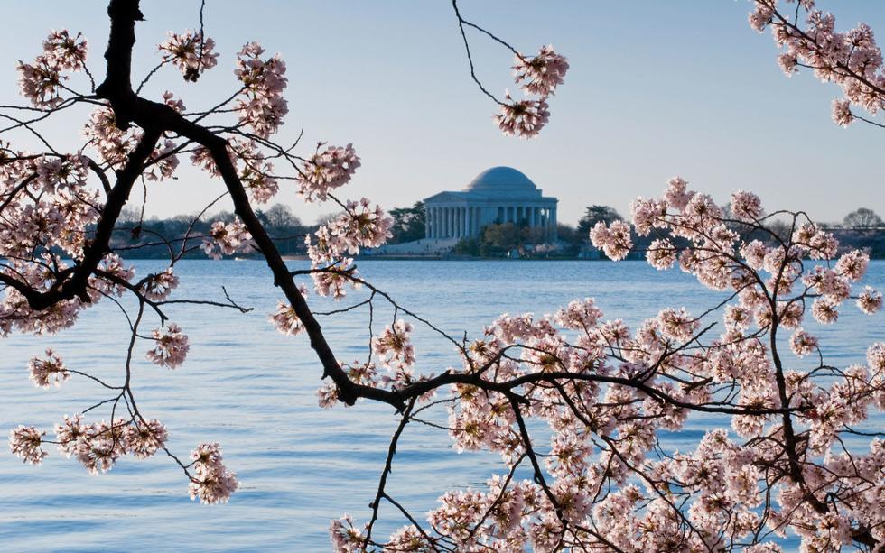9 địa điểm để ngắm hoa anh đào bên ngoài Nhật Bản - Ảnh 2.
