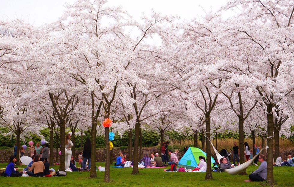 9 địa điểm để ngắm hoa anh đào bên ngoài Nhật Bản - Ảnh 4.