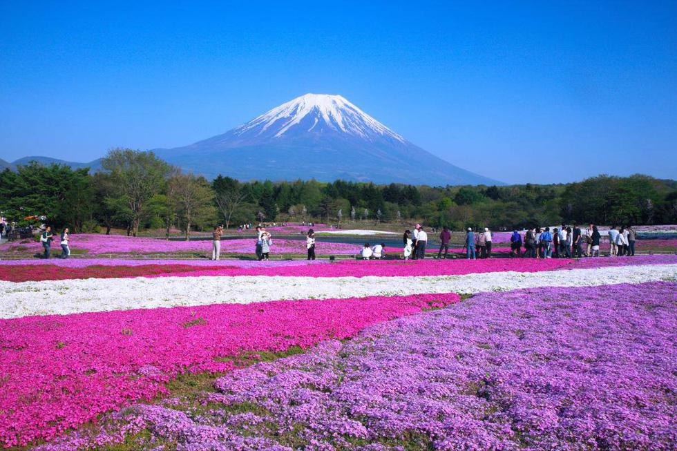 7 nơi ngắm hoa mùa xuân đẹp ngất ngây - Ảnh 1.