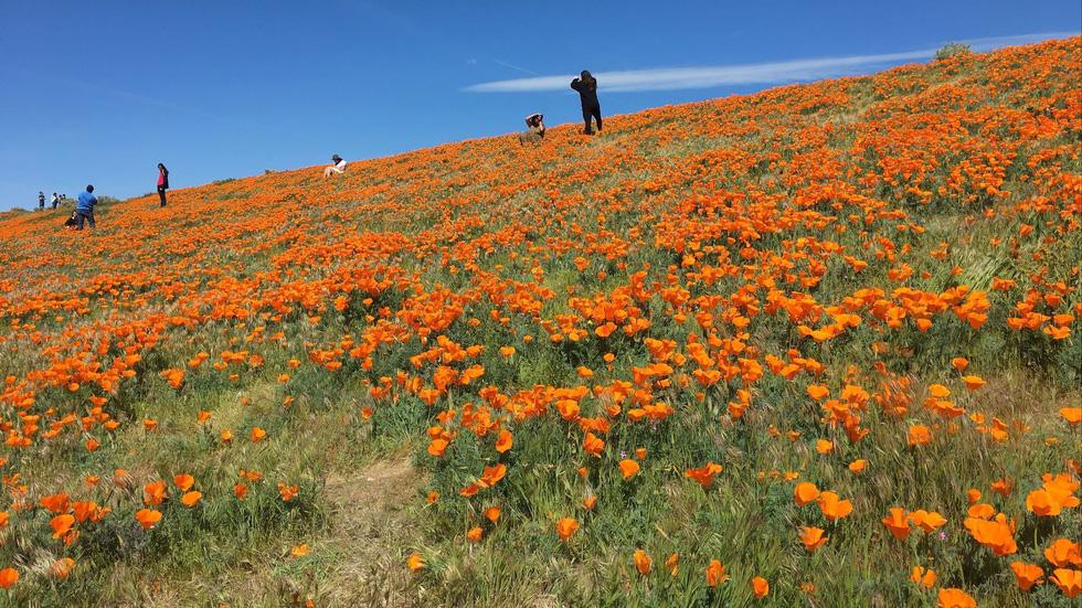 7 nơi ngắm hoa mùa xuân đẹp ngất ngây - Ảnh 2.