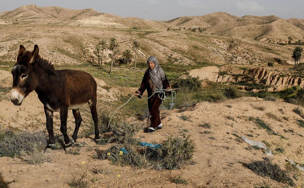 Cuộc sống của các gia đình dưới lòng đất ở Tunisia - Ảnh 4.