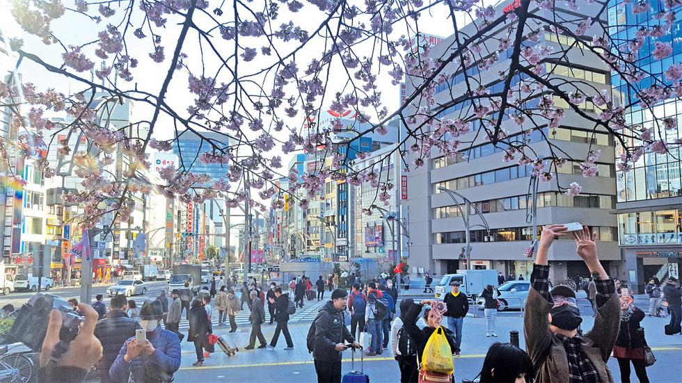 Vừa ngắm tuyết rơi, vừa ngắm anh đào ở Nhật - Ảnh 1.