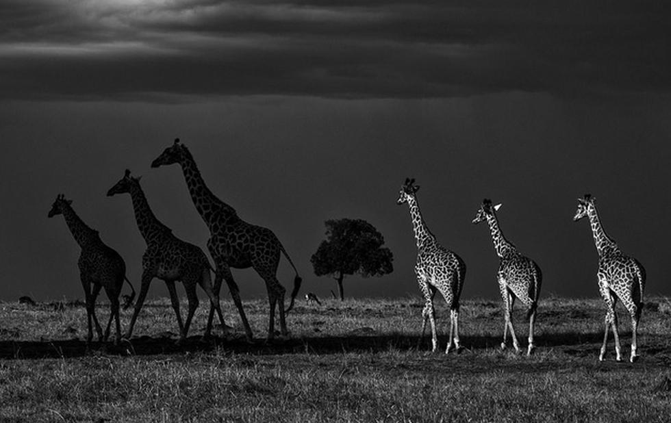 Những bức ảnh động vật sống động và vui - Ảnh 4.